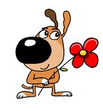 Cão, cachorrinho Foto de Stock Royalty Free
