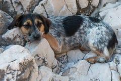 Cão cansado que descansa na praia após uma nadada Fotos de Stock Royalty Free