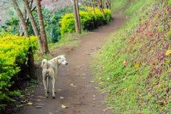Cão cego Fotografia de Stock