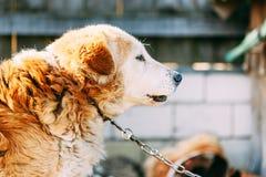 Cão Chain perto da casa imagens de stock royalty free