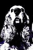 Cão cocker spaniel do vetor ilustração do vetor