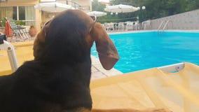 Cão com as orelhas longas que vestem os óculos de sol que olham a associação video estoque