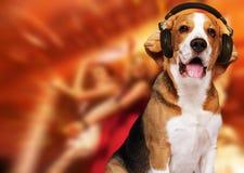 Cão com auscultadores Fotos de Stock Royalty Free