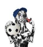 Cão com bola e assobio Imagens de Stock Royalty Free