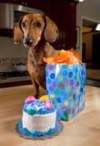 Cão com bolo e presente de aniversário Fotografia de Stock