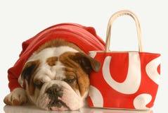Cão com bolsa vermelha Foto de Stock Royalty Free