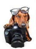 Cão com câmera imagem de stock royalty free