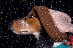 Cão com a capota na neve Imagens de Stock Royalty Free