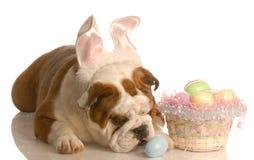 Cão com cesta de easter fotos de stock royalty free