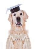 Cão com chapéu Imagens de Stock Royalty Free