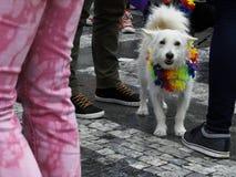 Cão com colar Fotografia de Stock