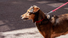 Cão com corda vermelha Imagens de Stock
