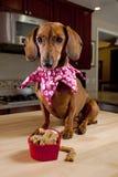 Cão com deleites na bacia dada forma coração Imagens de Stock