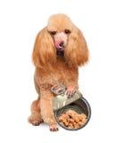 Cão com enlatado fotografia de stock