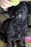 Cão com esfera Fotos de Stock Royalty Free