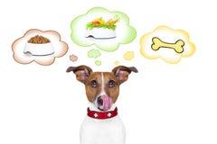 Cão com fome Imagens de Stock Royalty Free
