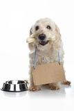 Cão com fome branco Fotos de Stock Royalty Free