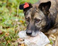 Cão com fome da rua Fotografia de Stock Royalty Free