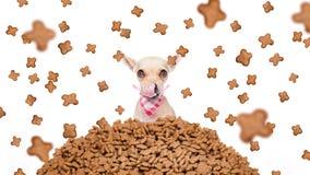 Cão com fome em uma chuva do alimento Foto de Stock