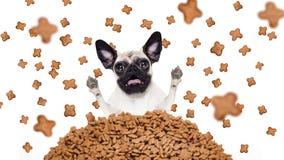 Cão com fome em uma chuva do alimento Imagem de Stock