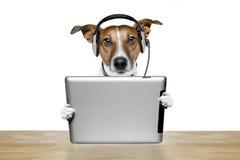 Cão com ipad Imagem de Stock