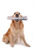 Cão com jornal Imagem de Stock Royalty Free