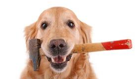 Cão com martelo Imagem de Stock Royalty Free
