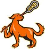 Cão com opinião lateral da vara do Lacrosse ilustração royalty free