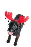 Cão com os chifres da rena que olham acima na câmera Foto de Stock Royalty Free