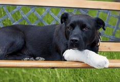 Cão com pé quebrado imagens de stock royalty free
