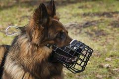 Cão com retrato do focinho fotografia de stock royalty free