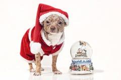 Cão com snowglobe do Natal imagens de stock royalty free