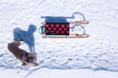 Cão com transporte que olha fixamente no céu foto de stock