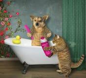 C?o com um gato no banheiro imagens de stock