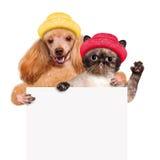Cão com um gato que realiza em sua bandeira do branco das patas Fotos de Stock Royalty Free