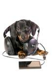 Cão com um jogador mp3 e os auscultadores imagens de stock