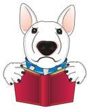 Cão com um livro vermelho Imagens de Stock Royalty Free
