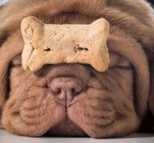 Cão com um osso imagens de stock royalty free