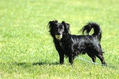 Cão com uma bola Fotografia de Stock