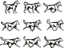 Cão-como ilustração royalty free