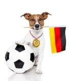 Cão como o futebol com medalha e bandeira Fotografia de Stock Royalty Free