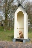 Cão como o protetor Foto de Stock Royalty Free