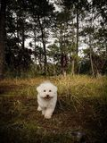 Cão como o rei novo da selva fotografia de stock