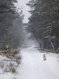 Cão congelado Imagens de Stock Royalty Free