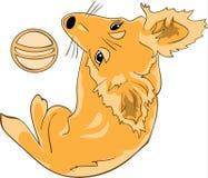 Cão consideravelmente ruivo com uma bola Imagens de Stock Royalty Free