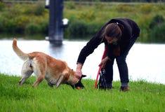 Cão contra a mulher Foto de Stock