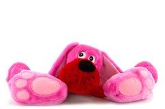 Cão cor-de-rosa Fotografia de Stock