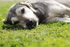 Cão dócil, cão dócil e fundo natural fotos de stock royalty free