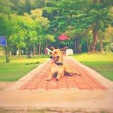 Cão da arte Fotografia de Stock