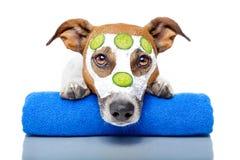 Cão da beleza fotografia de stock